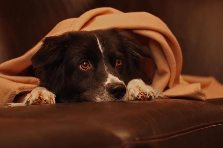 Wenn sich jeder von euch in deinem Bett sicher und wohl fühlt, dann sehe ich keinerlei Problem darin, nur weil einer ein Hund ist