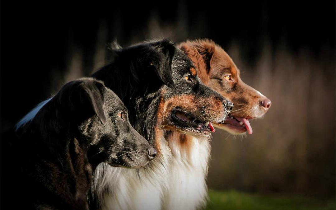 Gute Hundeschule in deiner Nähe